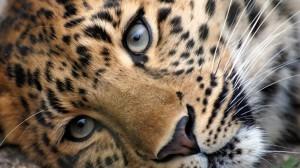 Leopard-728x409
