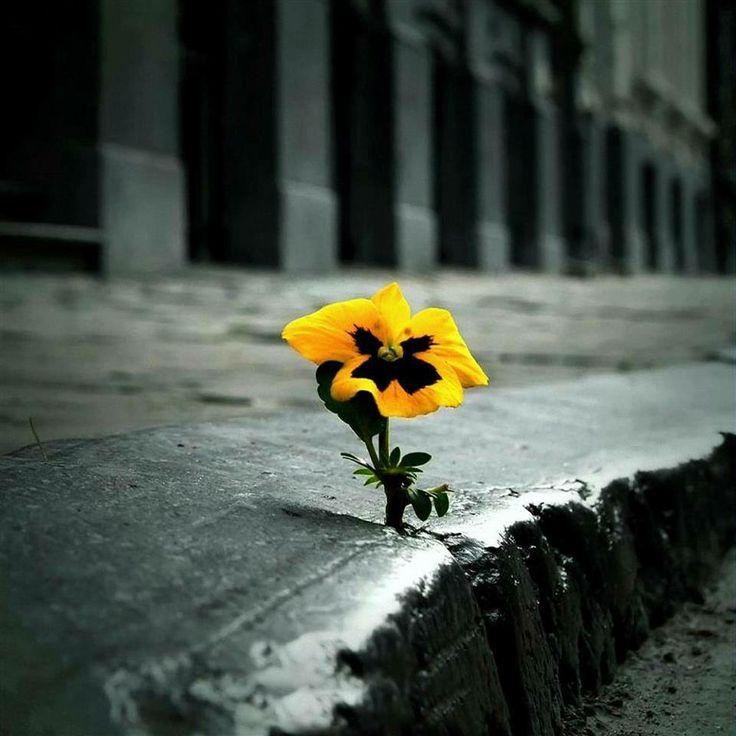 flower in crack